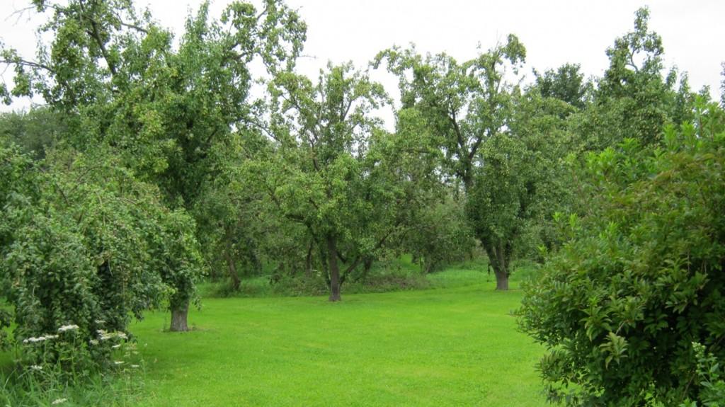 Eerste bezoek boomgaard 2011-5