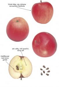Perzikrode Zomerappel